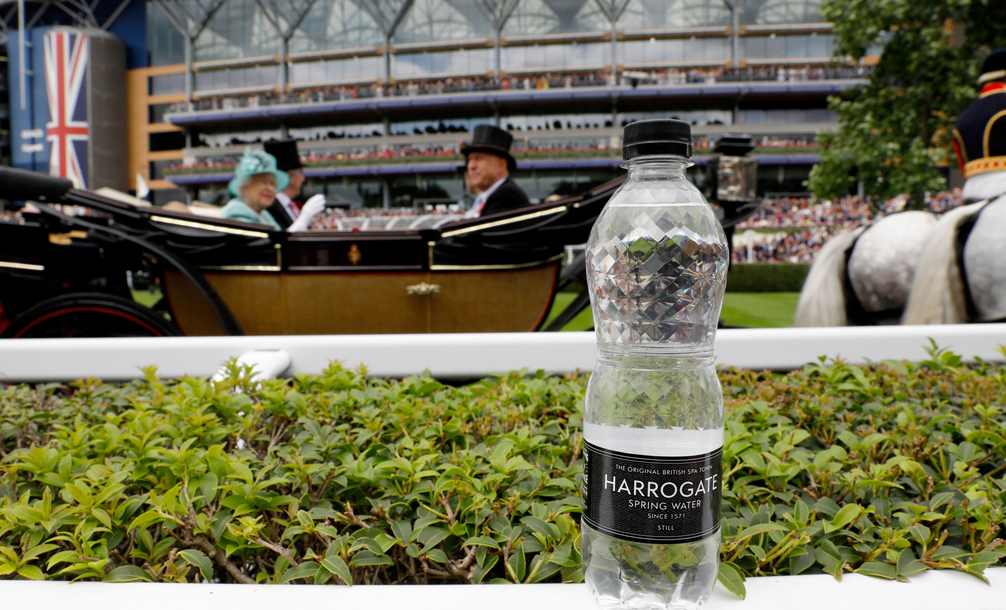 Harrogate Spring at Royal Ascot